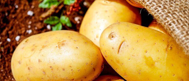 как-получить-картофель-в-апреле-фото