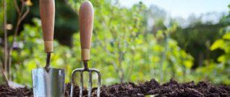 работы-в-саду-фото