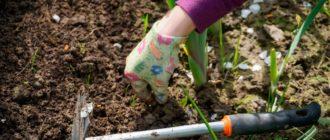 работы в саду в мае фото