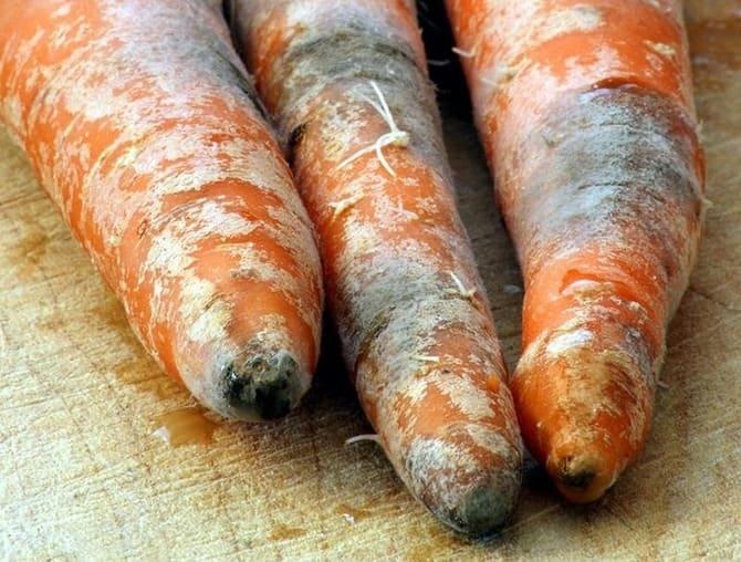 Фото гнилой моркови