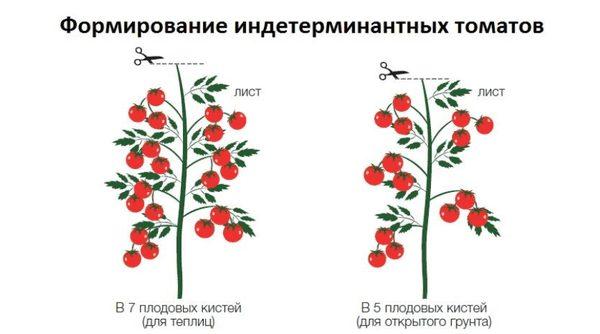 как формировать индетерминантные томаты