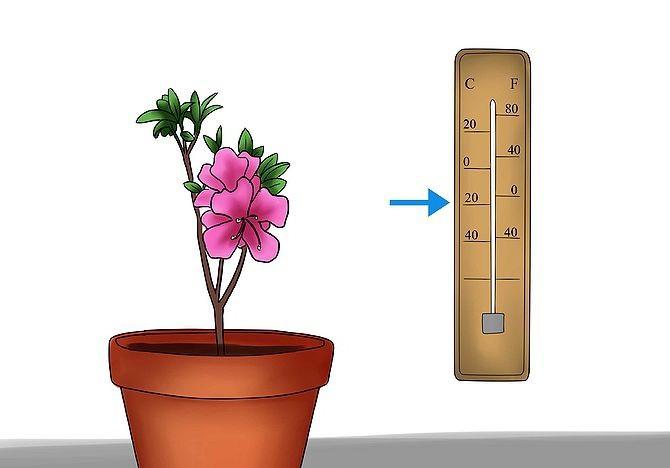Схема оптимальной температуры для азалии