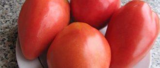 """Фото урожая томатов """"Петруша огородник"""""""