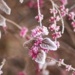 Фото малины зимой