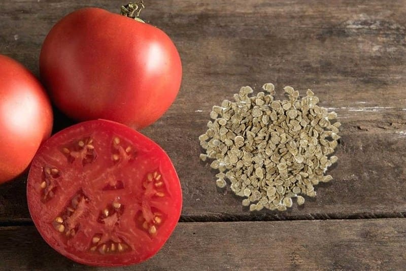 Фото семян помидоров