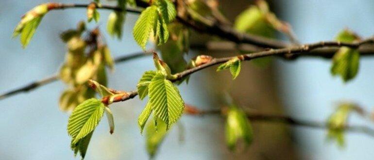 Фото лунный календарь на апрель_главная