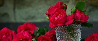 Фото розы в вазе