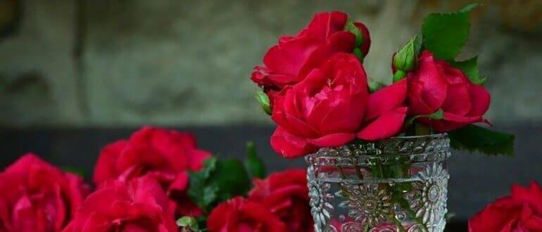 Как из срезанной розы вырастить саженец