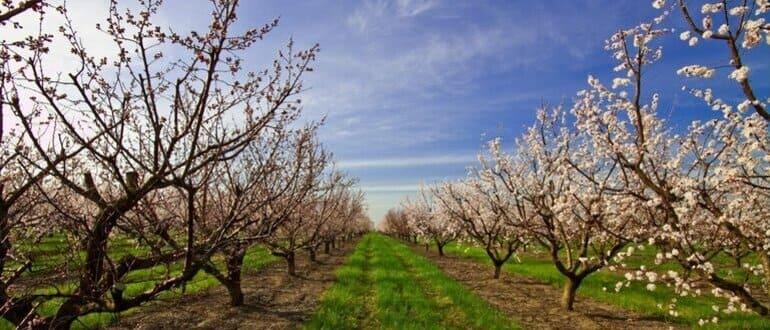 Чем обработать плодовые деревья весной от вредителей (ТОП-20 основных инсектицидов)