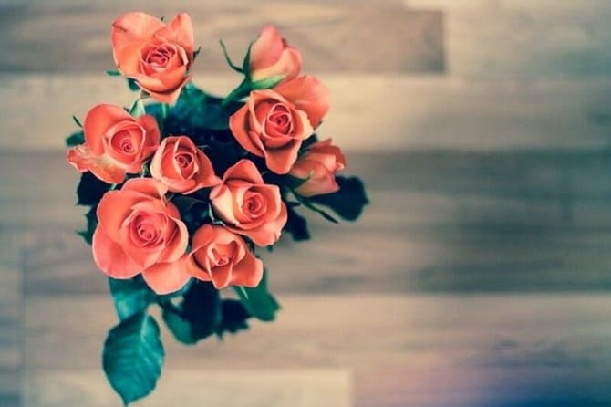 Уход за розами фото