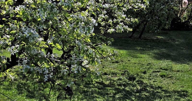 Фото деревьев