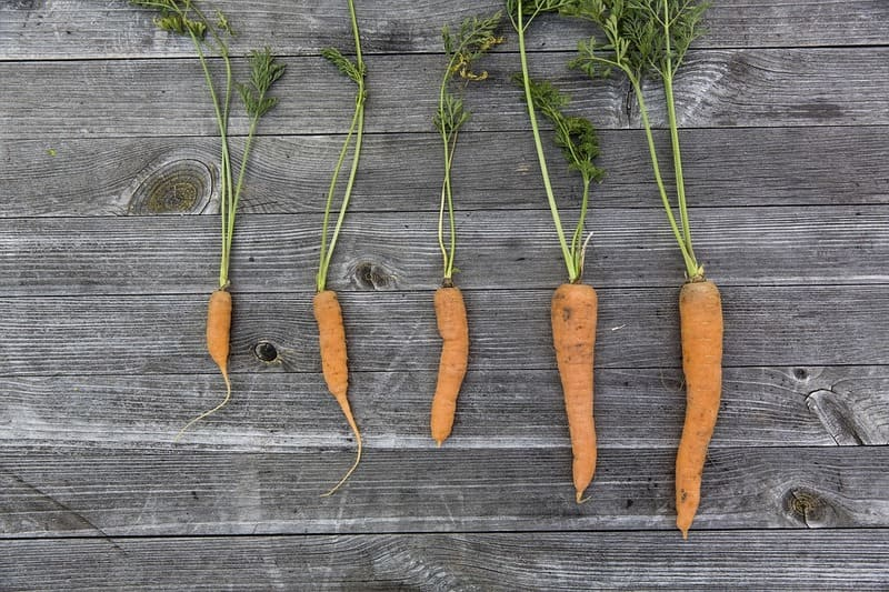 Фото морковок