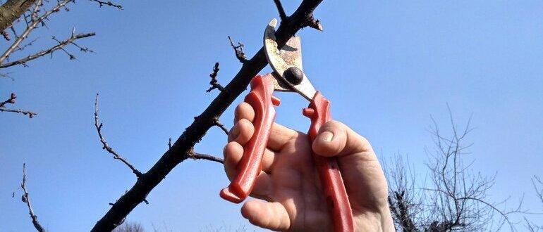 Фото обрезки деревьев_главная