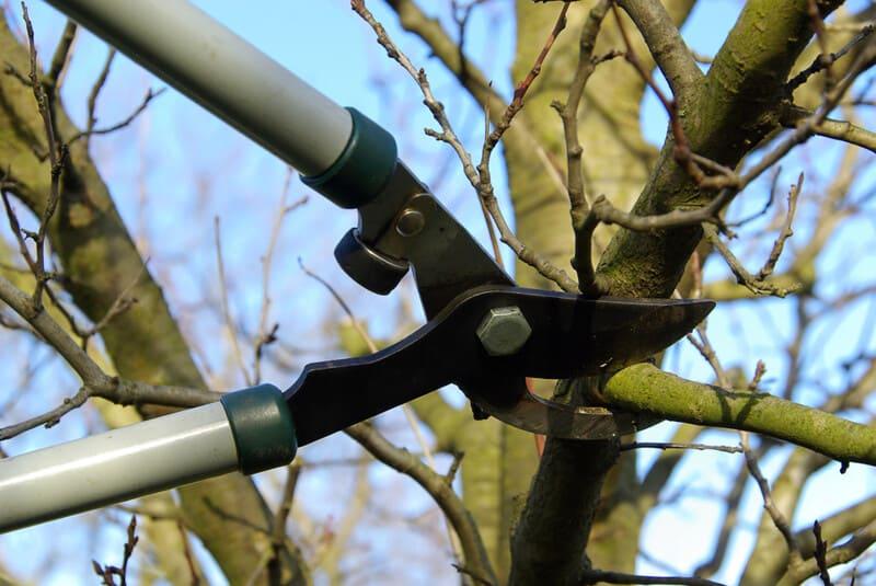 Фото обрезки плодовых деревьев