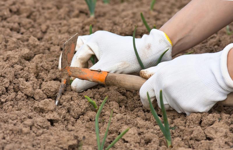 Фото рыхления почвы
