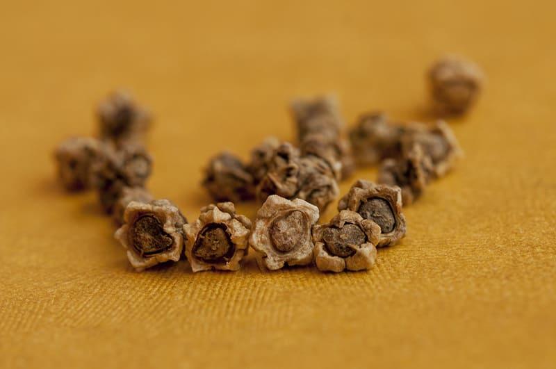Фото семян свеклы