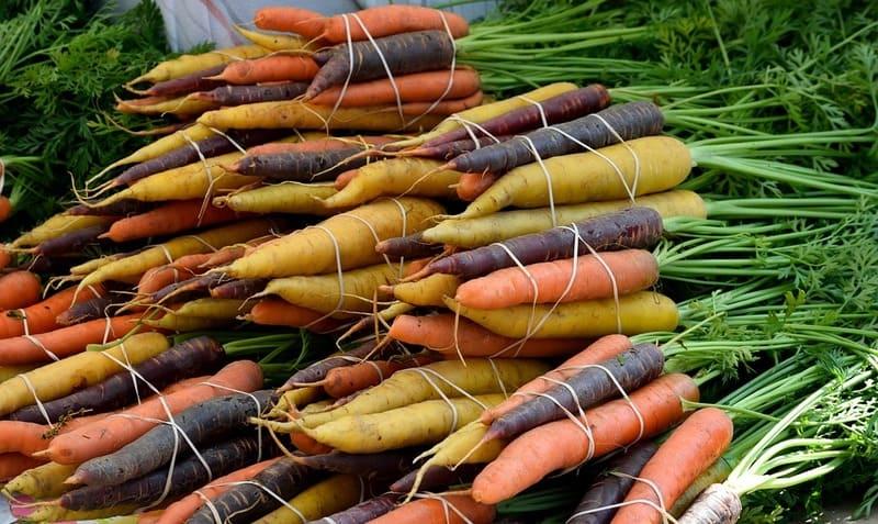 Фото сортов моркови
