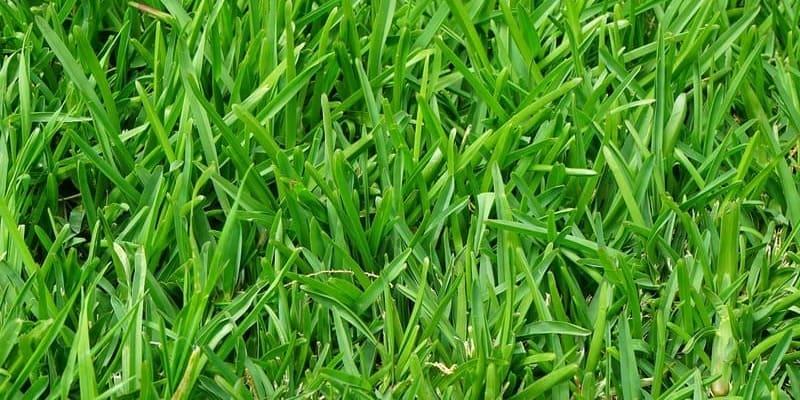 Фото травы