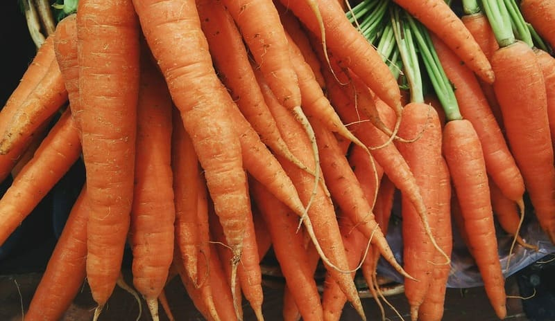 Фото урожая моркови
