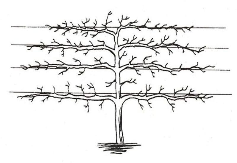 Изображение обрезки пальметта