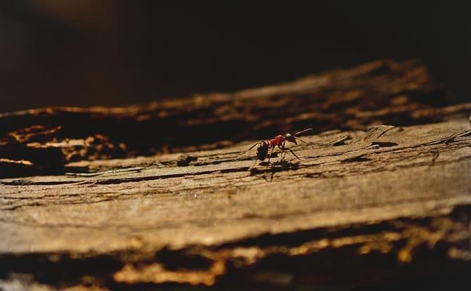 Фото муравья на дереве