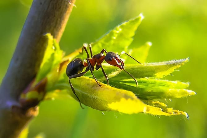 Фото муравья на листе