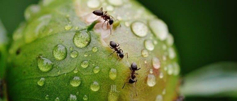 Фото муравьев_главная