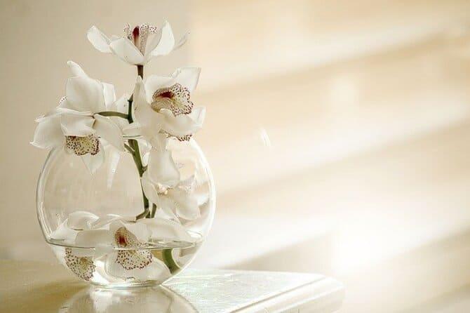 Фото орхидеи в аквариуме