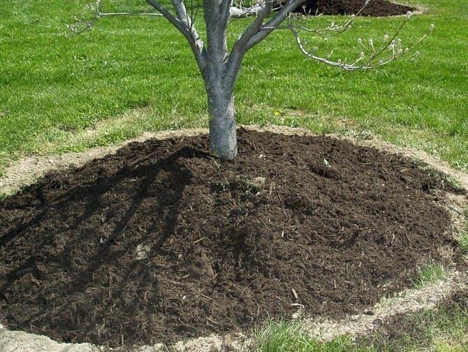 Фото подкормки деревьев азофоской