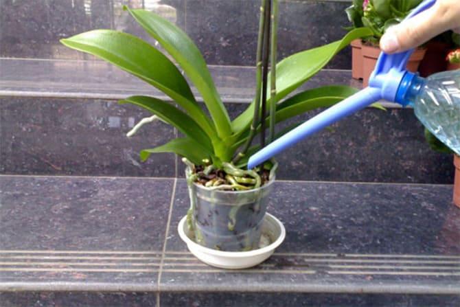Фото полива орхидеи лейкой