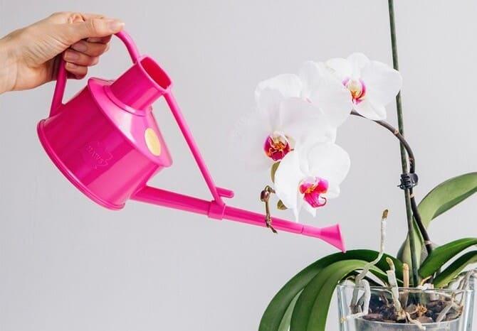 Фото полива орхидеи