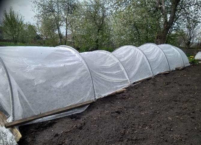 Фото укрытия помидоров