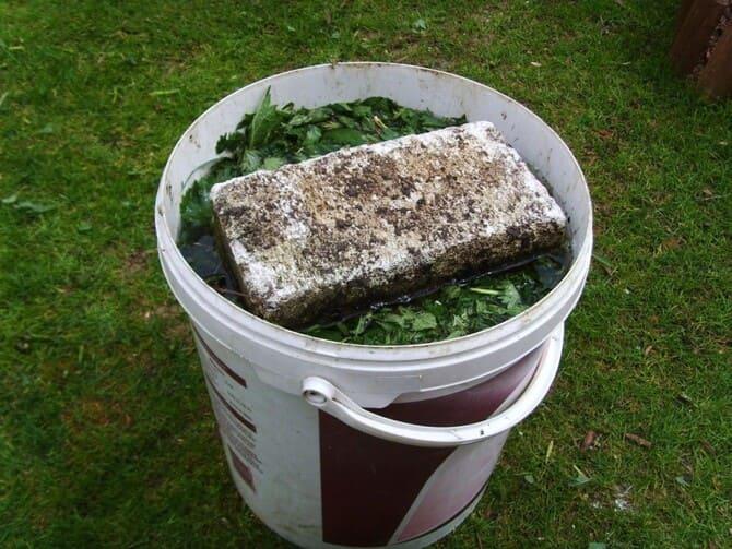 Фото жидкого компоста