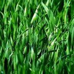 Фото зеленого удобрения_главная