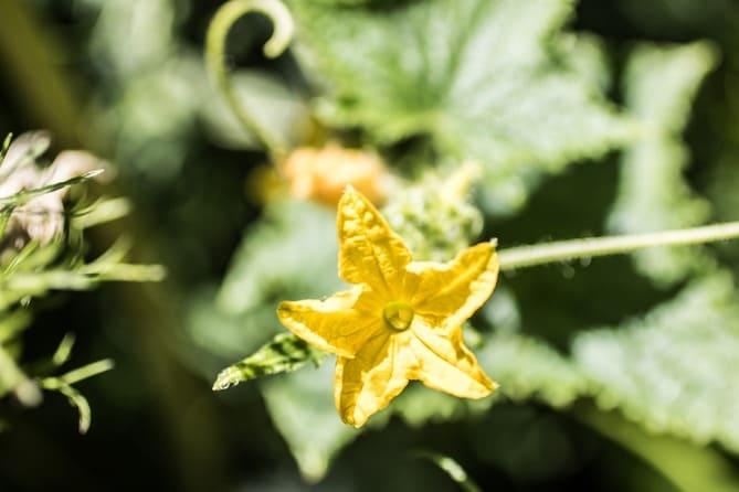 Фото пустоцвета