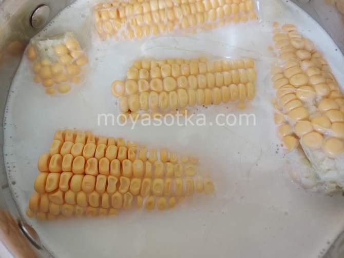 Фото кукурузы в молоке