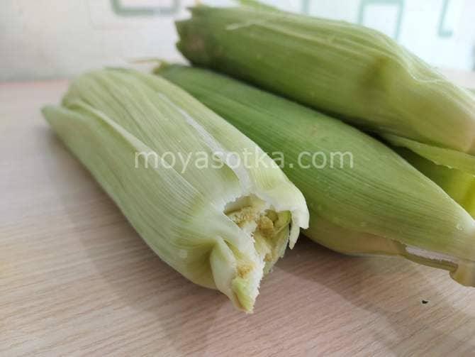 Фото кукурузы в початках