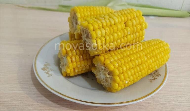 Фото кукурузы_главная