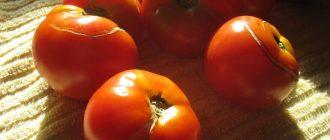 Фото треснувшего помидора_главная