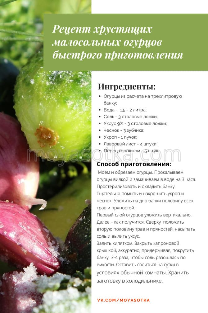 Фото рецепта хрустящих огурцов