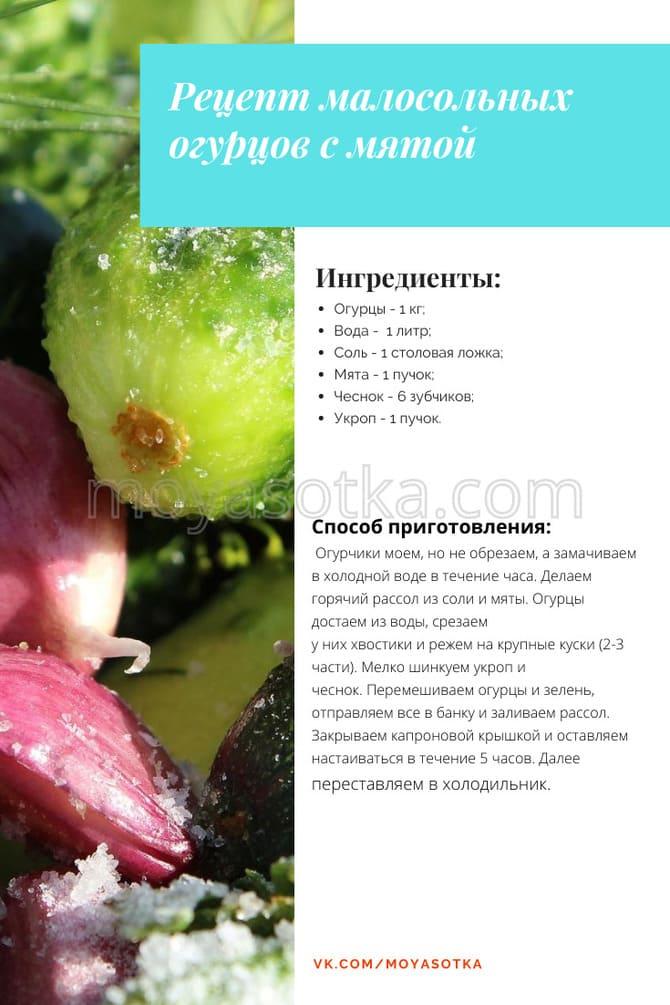 Фото огурцов с мятой