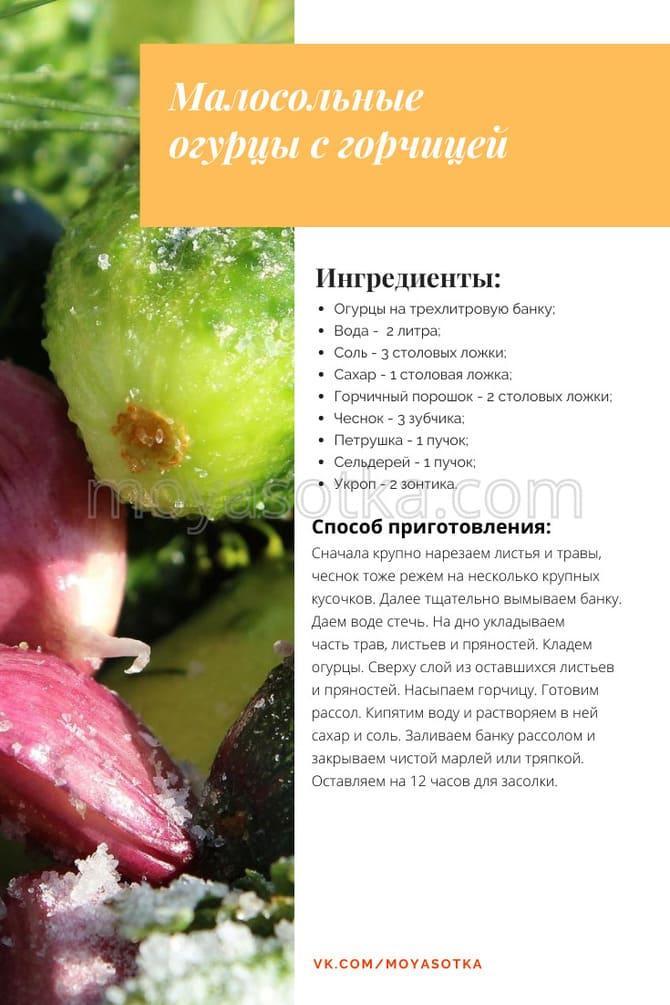 Фото огурцов с горчицей