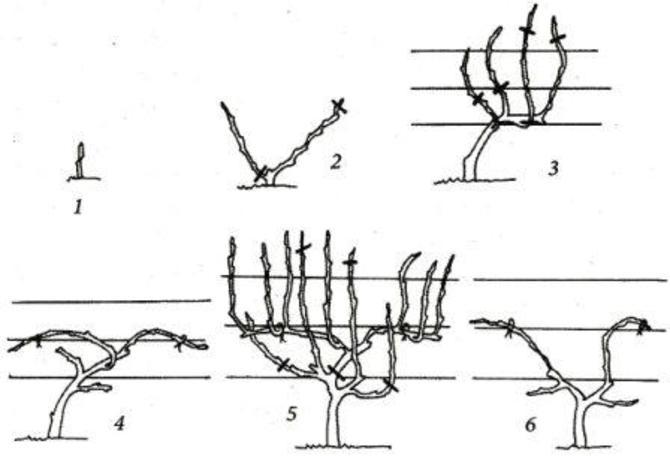 Схема обрезки методом Гюйо