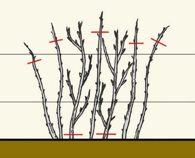 Схема классической обрезки