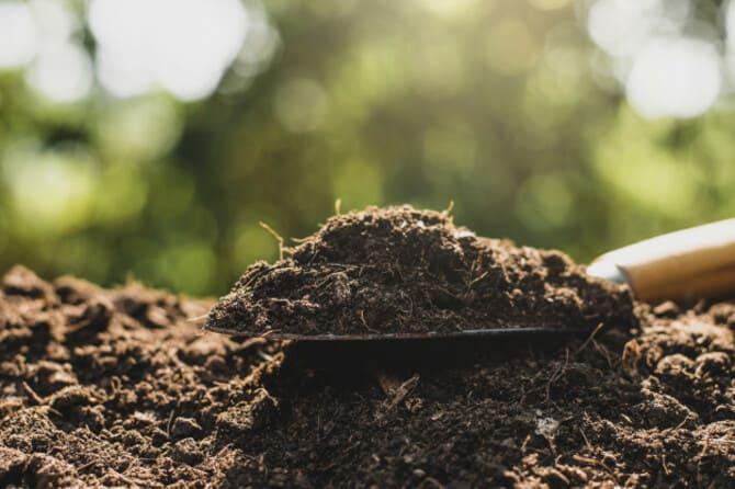 Фото почвы