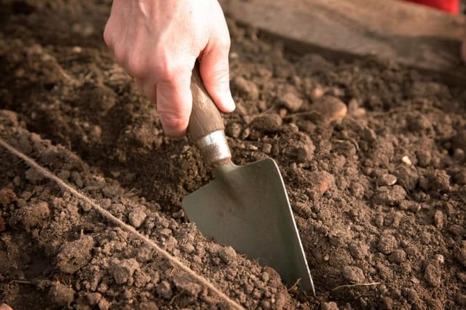 Когда и как сеять тыкву в 2021 году на рассаду и в открытый грунт по лунному календарю