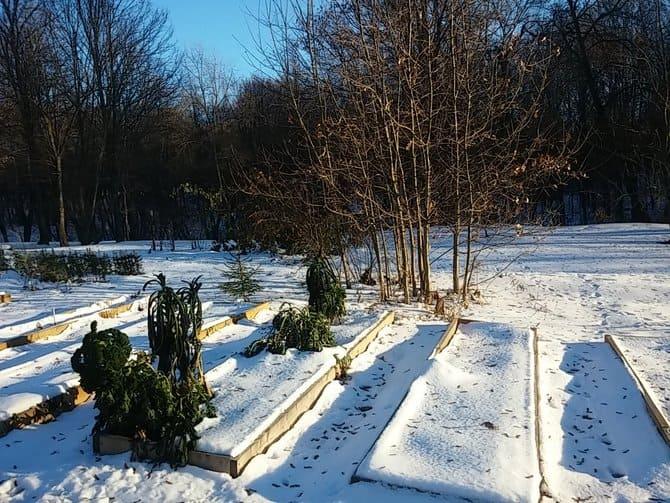 Фото огорода под снегом