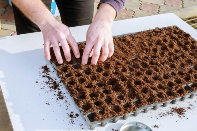 Фото посадки семян перца