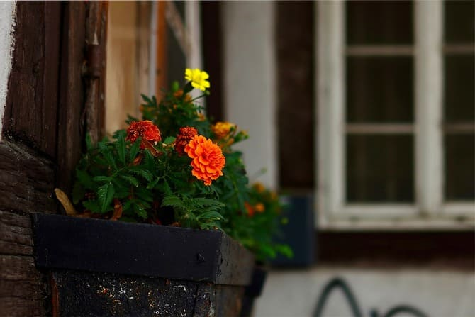 Фото цветов на улице