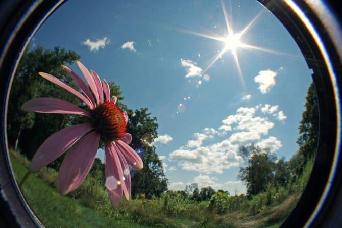 Фото цветка в объективе